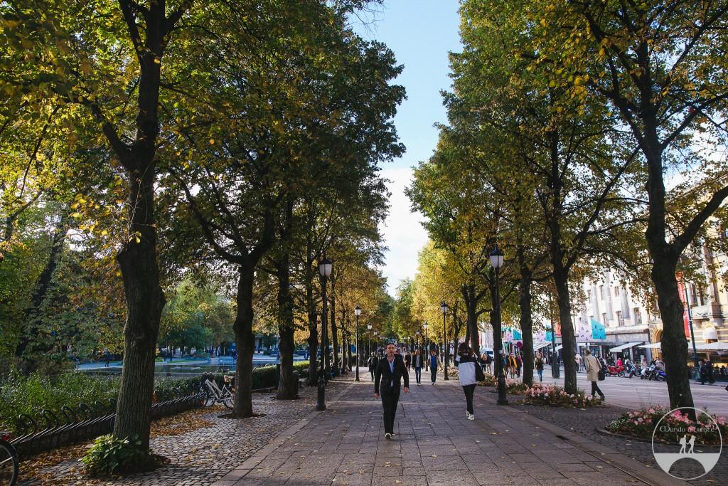 Começo do outono em Oslo - folhas ao chão