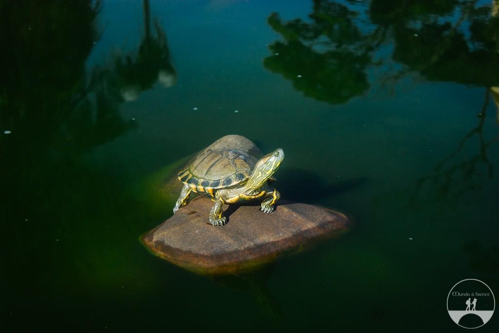 Tartaruga na fonte da praça