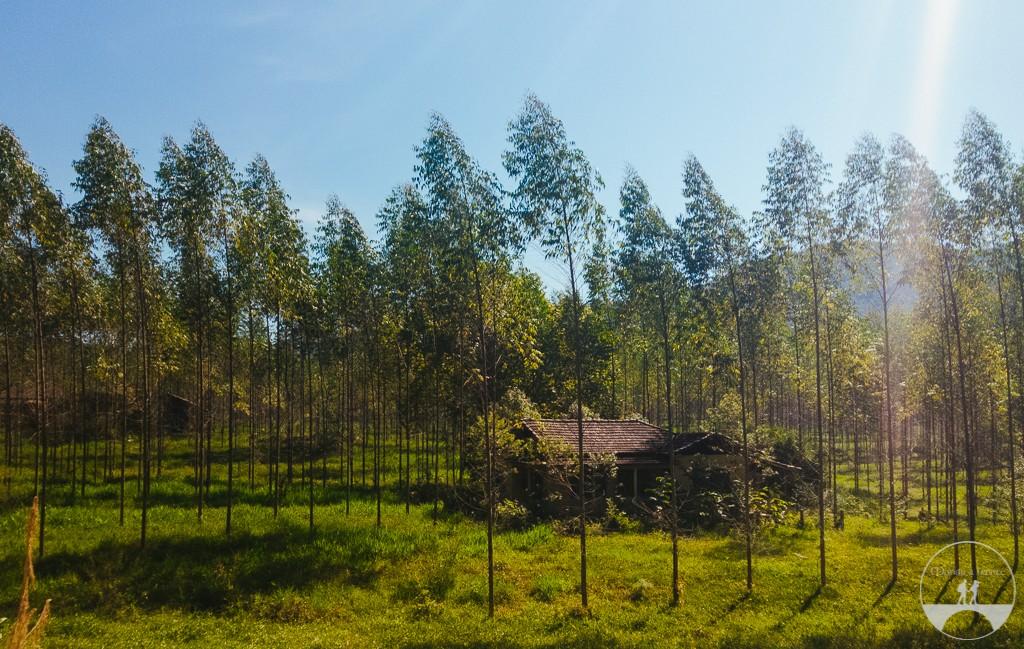 Casinha abandonada entre várias árvores que foram plantadas simetricamente